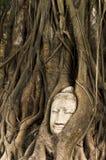 SandstenBuddha head bevuxet vid Banyantreen Arkivfoton