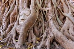 SandstenBuddharäkning vid trädet Fotografering för Bildbyråer