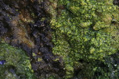 Sandstone and algae Royalty Free Stock Photos