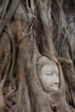 Sandstone Buddha's Face Stock Images