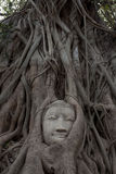 Sandstone Buddha's Face Royalty Free Stock Photography