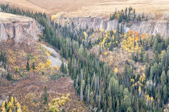 Sandstone cliff, aspen and spruce in Colorado Royalty Free Stock Photos