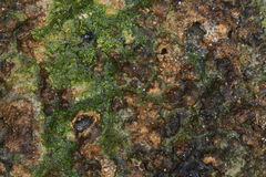 Sandstone covered by algae. Stock Photo