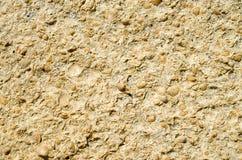 Sandstone with fossilized seashells closeup Stock Image