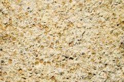 Sandstone with fossilized seashells closeup Stock Photo