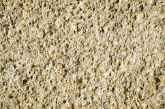 Sandstone with fossilized seashells closeup Stock Photography