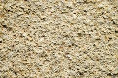Sandstone with fossilized seashells closeup Stock Photos
