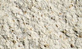 Sandstone with fossilized seashells  closeup Royalty Free Stock Photos