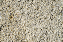 Sandstone with fossilized seashells closeup Royalty Free Stock Image