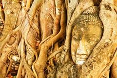 Sandstone head of buddha. Monuments of buddah, ruins of Ayutthaya, old capital of THAILAND Stock Photos