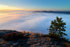 Sandstone peaks increased from foggy background, the fog is orange due to sunrise, sun on the sky, Germany. Beautiful morning view Royalty Free Stock Image