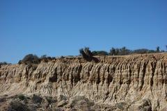 Sandstone rock face, Torrey Pines State Reserve. Sandstone rock face with desert plants at Torrey Pines State Reserve Stock Photo