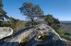 Sandstone rock in Fontainebleau forest. Larchant gulf in Fontainebleau massif forest Stock Image