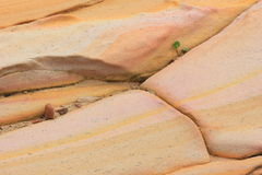 Sandstone with seedling growing Royalty Free Stock Photo