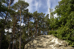 Sandstone and silver birch in french forest stock photo
