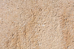 Sandstone texture with fossils Stock Photos