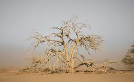 Sandstorm and tree Stock Images