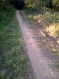 Sandstraße, die den dunklen Wald betritt Stockfotos