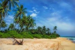 Sandstrand och blå himmel Sri Lanka Fotografering för Bildbyråer