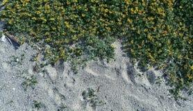 Sandstrand und -blumen Stockfoto