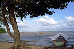 Sandstrand und Flusslandschaft, Surinam lizenzfreie stockfotos