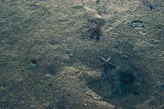 Sandtextur med sjöstjärnan Royaltyfri Foto