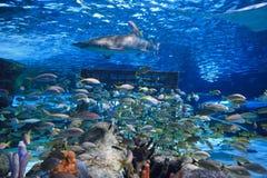Sandtiger-Haifisch lizenzfreies stockbild