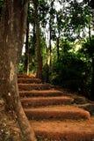 Sandtrappan leder till överkanten i djungeln, utöver träden arkivbild