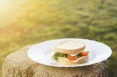 Sanduíche com salada, tomates, queijo em uma madeira e fundo natural A grama gosta de um fundo e de uma luz do sol O alimento de  foto de stock royalty free