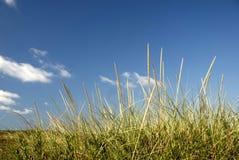 sandune seagrass Στοκ εικόνες με δικαίωμα ελεύθερης χρήσης