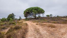Sandväg i Algarve Arkivfoton