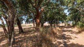 Sandväg till och med skog Fotografering för Bildbyråer