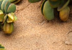 Sandviper in the sand - Namibia Africa royalty free stock photos