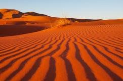 Sandw?ste lizenzfreies stockfoto