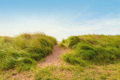 Sandweg über Dünen mit Strandhafer Stockfotografie