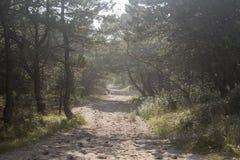 Sandweg, der in das Holz führt lizenzfreie stockfotos