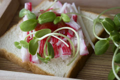 Sandwich à pousse de merde et de tournesol Images libres de droits