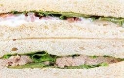 Sandwich à thon de blé entier Image stock