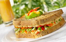Sandwich. Tuna Sandwich with salad. Outdoor setting Stock Images