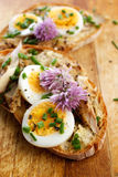 Sandwich with  adition of mackerel fish , eggs and edible flowers of chives on wooden table Stock Image