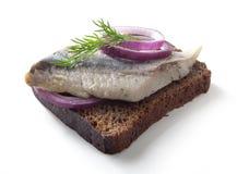 Sandwich avec des harengs images stock
