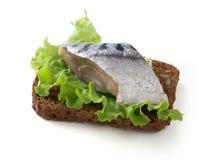 Sandwich avec le petit maquereau images stock