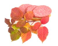 Sandwich with branch. Of autumn raspberry on white background Stock Image