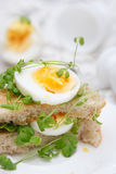 Sandwich with egg and cress Stock Photos