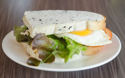 Sandwich and egg Stock Images