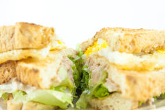 Sandwich full of tuna and lettuce vegetables sliced in half and decorated on the plate -  Super Closeup. Royalty Free Stock Photos