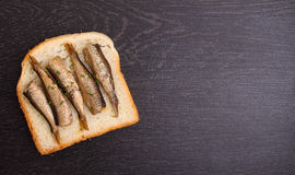 Sandwich with sprats Stock Images