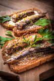 Sandwich with sprats. Stock Image