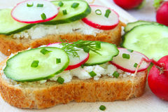 Sandwiches with radish,cucumber and soft cheese Royalty Free Stock Photography