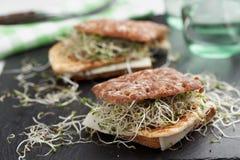 Sandwichs avec la dinde, le fromage, et les pousses grillés de poireau Photos stock